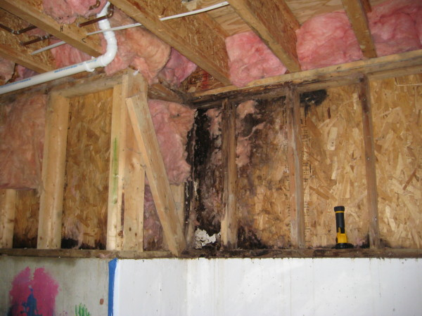 Leaky Homes Amp Weathertightness Building Guide House
